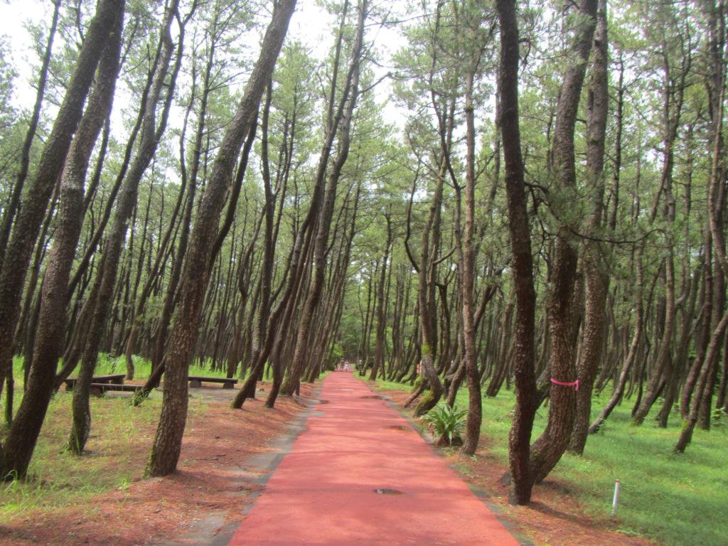 宮崎旅行 サンビーチ一ツ葉への歩道